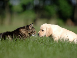dog and cat friendship - meeting