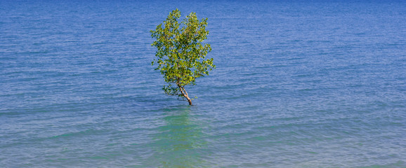 Solitary tree in the ocean