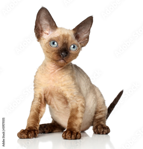 Portrait of a Devon rex kitten on white background