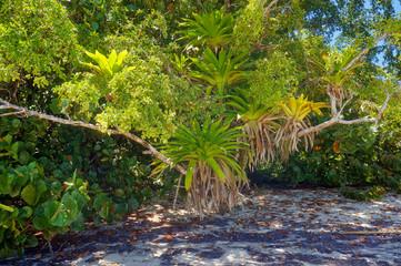 Lush epiphytes Bromeliads