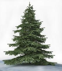 3D Pine Tree in Winter