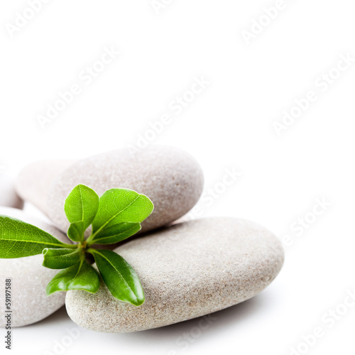 stones and green leaves