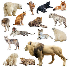 Set of predatory animals. Isolated over white