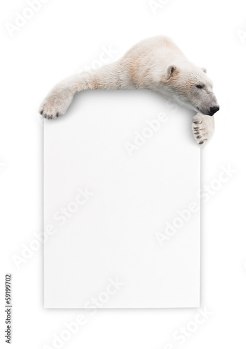 Fotobehang Ijsbeer Polar bear with a sheet of paper