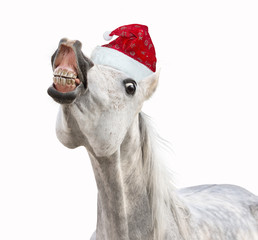 Smiling Christmas horse with hat on white background