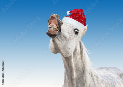 funny white horse with Santa  hat
