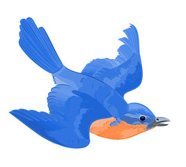 A little bird in flight