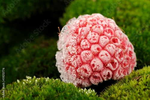 Frozen Raspberry on Green Moss Close Up