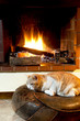 Cat in front of fireplace