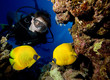 Scuba diver looks at Masked Butterfly Fish