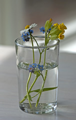Some picked spring flowers in a glass of water.