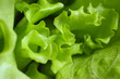 Green lettuce leaf texture background