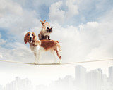 Dog balancing on rope