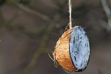 coconut feeder for garden birds