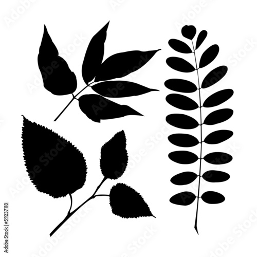 Set realistic isolated plant leaves