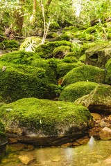 Moss covered rocks near wallterfall in in  a green wild tropical