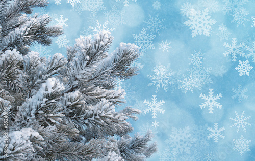 Frosty pine twigs against blue background with snowflakes