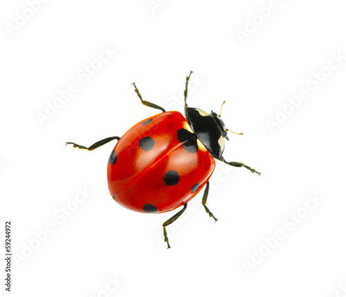 Leinwanddruck Bild Ladybug
