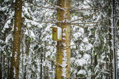 Bird house in winter in the forest on the pine