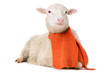 Sheep in clothes