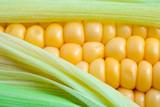 Corn - 59257565