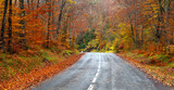 Fototapety road in the forest in autumn, fall colors