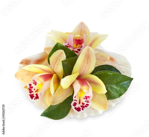 Orchid flowers in the seashell