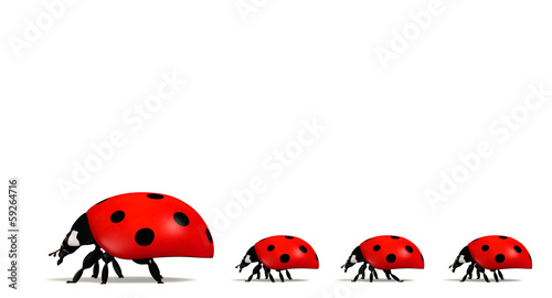 Ladybirds in a horizontal row