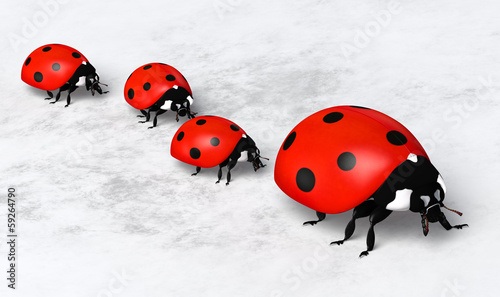 Ladybirds in a row