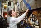 Young woman in white robe operates machine for milking of cows
