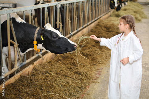 Cute little girl in white robe gives hay to cow at large farm