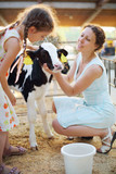 Little girl and her mother caress calf at cow farm at sunny day.