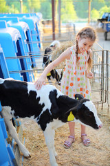 Happy little girl strokes black and white calf at cow farm