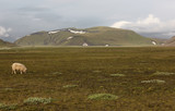 Iceland. South area. Fjallabak. Landscape with rhyolite formatio poster