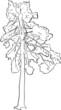 pine sketch on white background