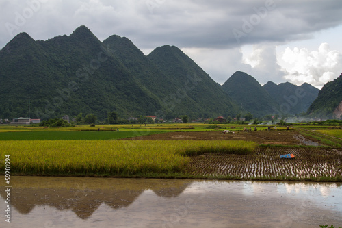 Bac Son Rice Field