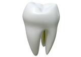Fototapety Single Tooth