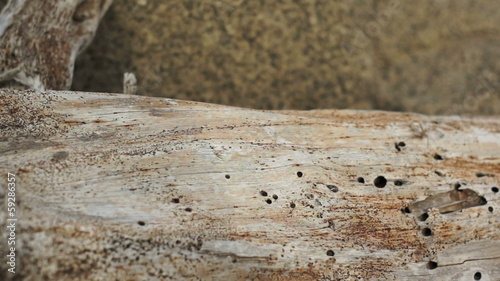 Driftwood Log Macro Dolly
