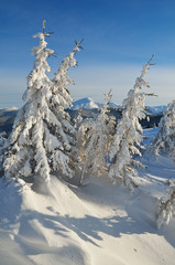 Snow-covered trees in the mountains