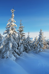 Fresh snow in the forest