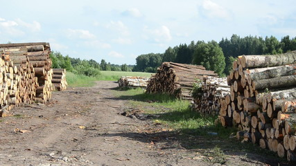 sustainable organic wood fuel stacks and birch logs near forest