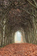 Tunnel of trees on a foggy, autumn day.