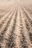 Furrows in a field after plowing it. poster