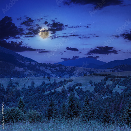 midnight coniferous forest on a mountain slope