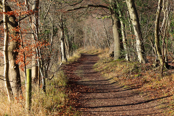 Autumn Landscape with track between Trees