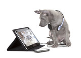 Fototapety Thai ridgeback puppy with tablet computer
