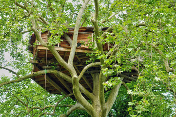 Normandie, wood hut in a tree in the park of Canon castle