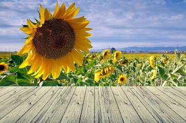 sun fower