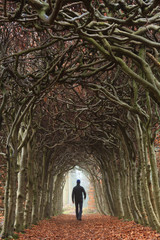 Man walking in a tunnel of trees in autumn.