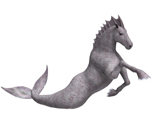 Hippocampus Mermaid's Horse